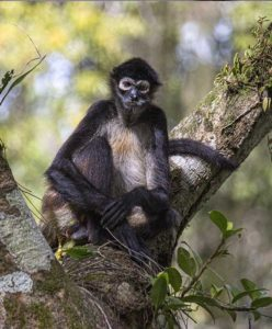Forest Monkey - Decoding the Lost World of the Maya